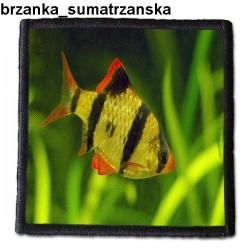 Naszywka Brzanka Sumatrzanska 01