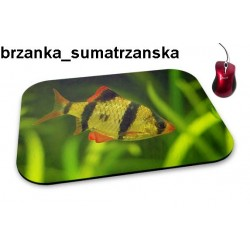 Podkładka pod mysz Brzanka Sumatrzanska 01